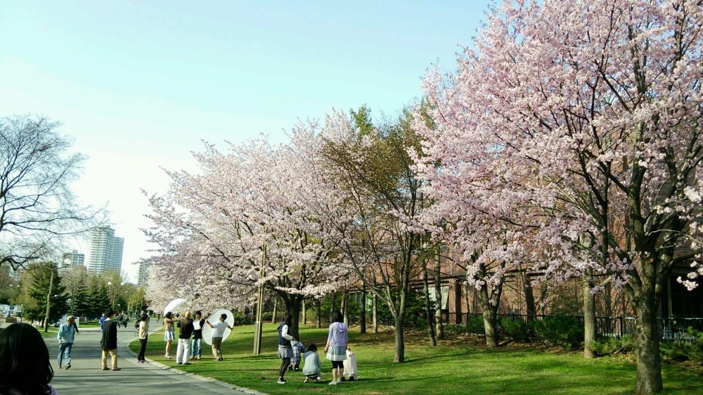札幌サイクリングコース-桜