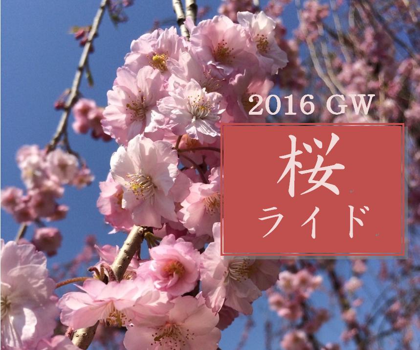 札幌サイクリングロードで桜